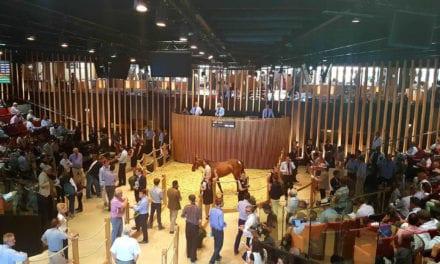 En piste vers les ventes aux enchères de chevaux
