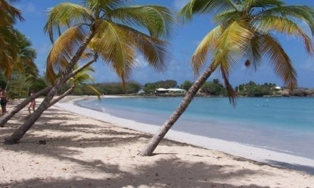 Hélène Martin: retour de la commissaire priseur martiniquaise  vers l'Ile aux trésors