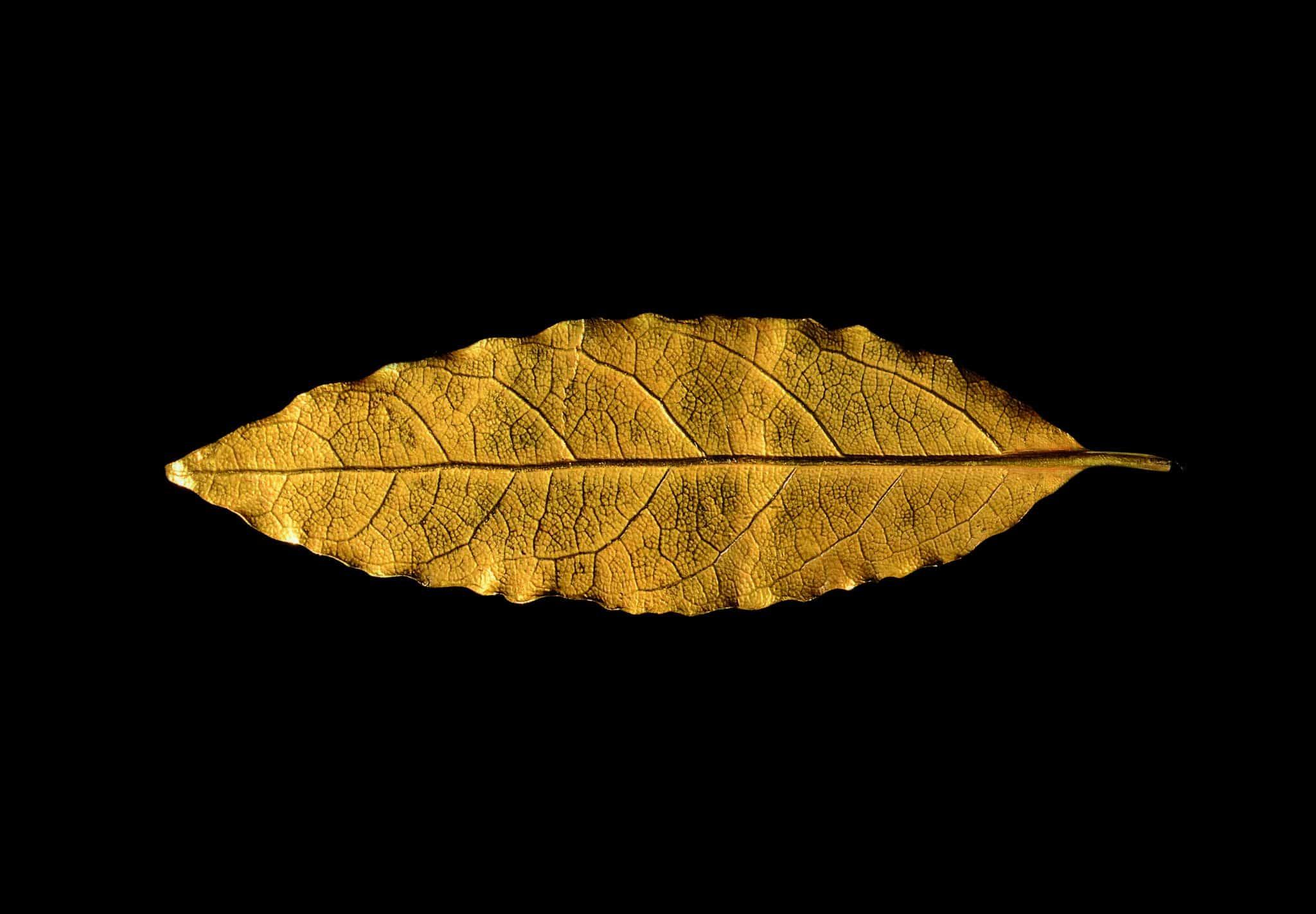 Feuille d'or couronne sacre Napoléon enchères Osenat Fontainebleau