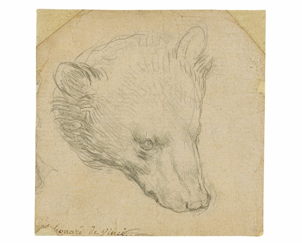 Da Vinci 'Head of a Bear' could sell for over $16 million at upcoming auction